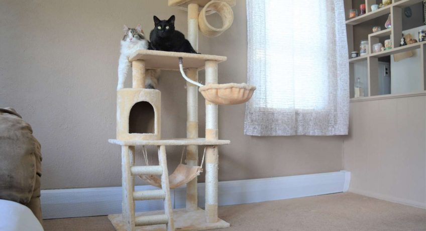 Cat-Tree-for-playing