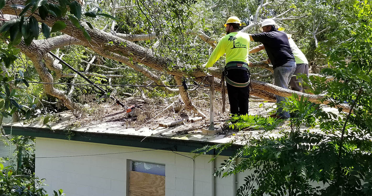Everything That You Need To Know About Tree Removal Service H2o Sushi