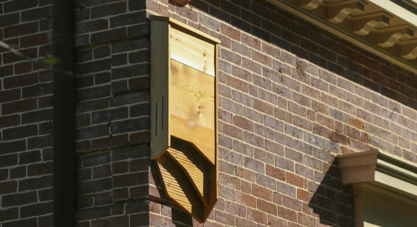 bat-box-house