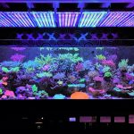 light-for-aquarium-plants