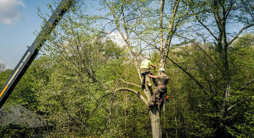 3-qualities-a-tree-service-must-have/