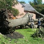 Affordable-tree-service
