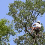 cheap tree cutting service near me
